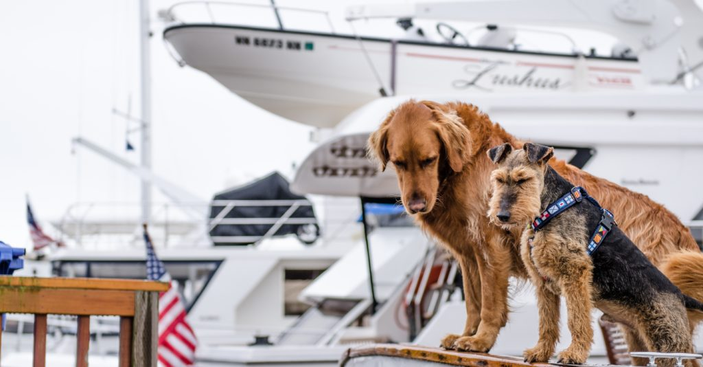 dogs-on-boats